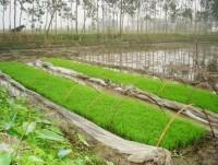 Kinh nghiệm bản địa trong canh tác nông nghiệp
